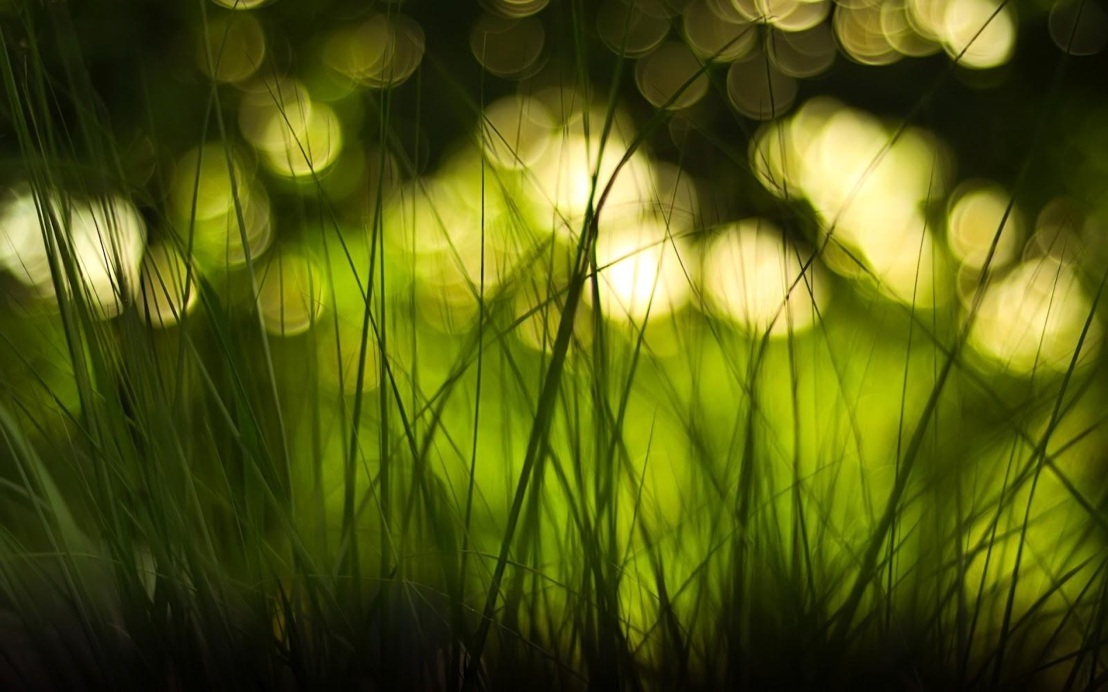 light blurred background hd - photo #24