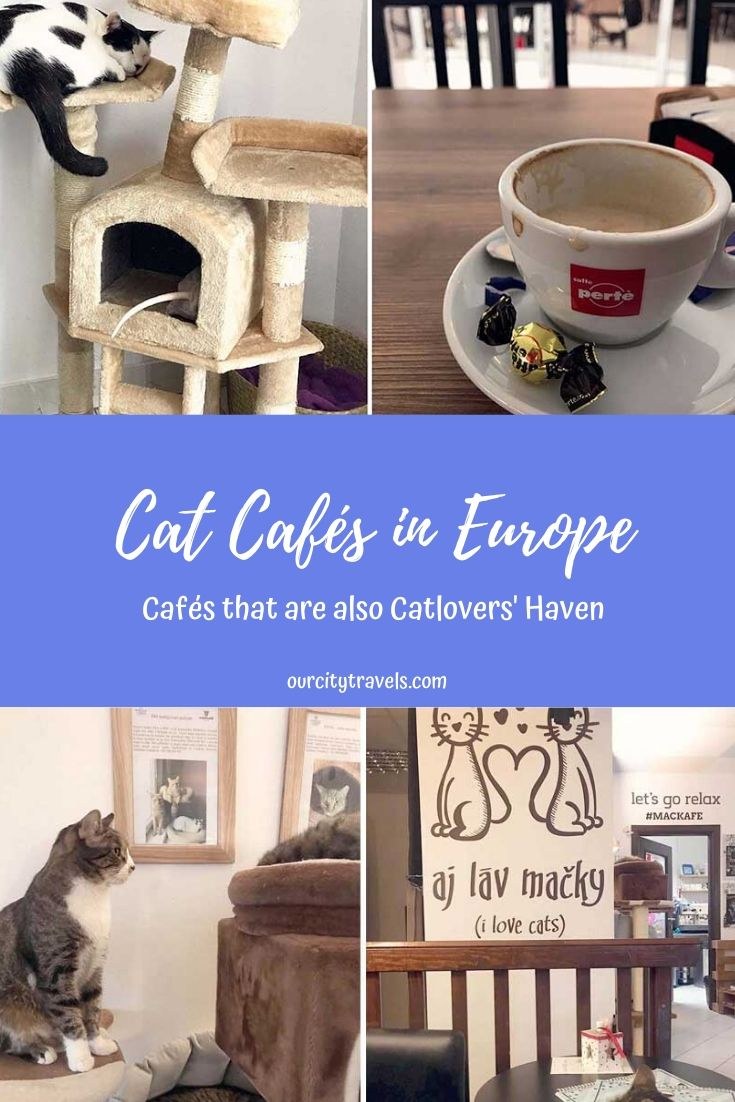 Cat Cafés in Europe A Catlover Must Visit