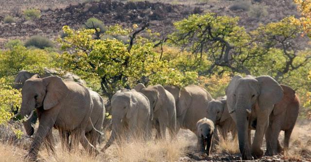 Palmwag Lodge Damaraland, Namibia