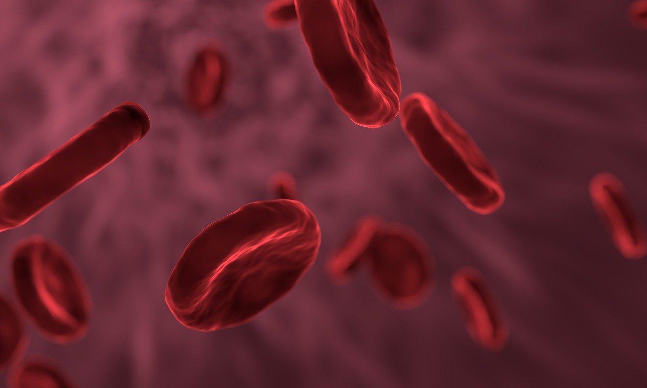 Functions of red blood cells for the human body