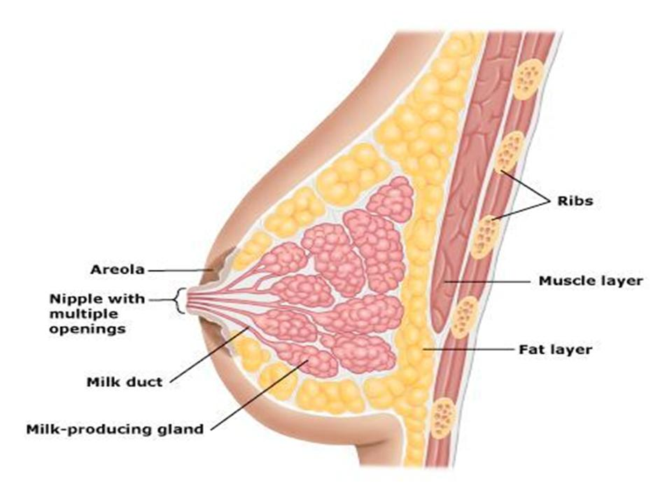 Causes Of Sore Nipples During Breastfeeding