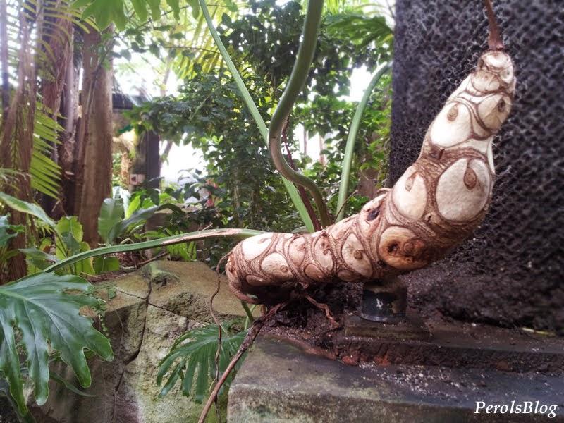Serre amazonienne du zoo du Lunaret