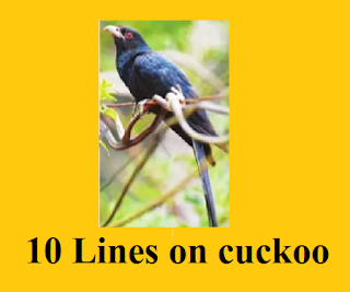 10 sentences about cuckoo