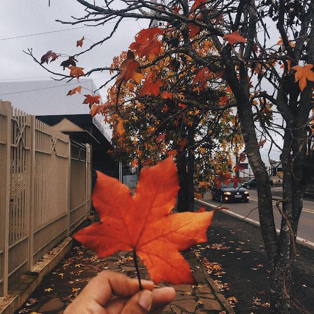 foto de uma mão segurando uma folha seca de cor alaranjada