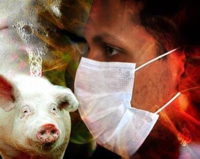 خطير...دراسة صينية تحذر من فيروس جديد في الخنازير يمكن أن يتحول إلى جائحة بين البشر✍️👇👇👇