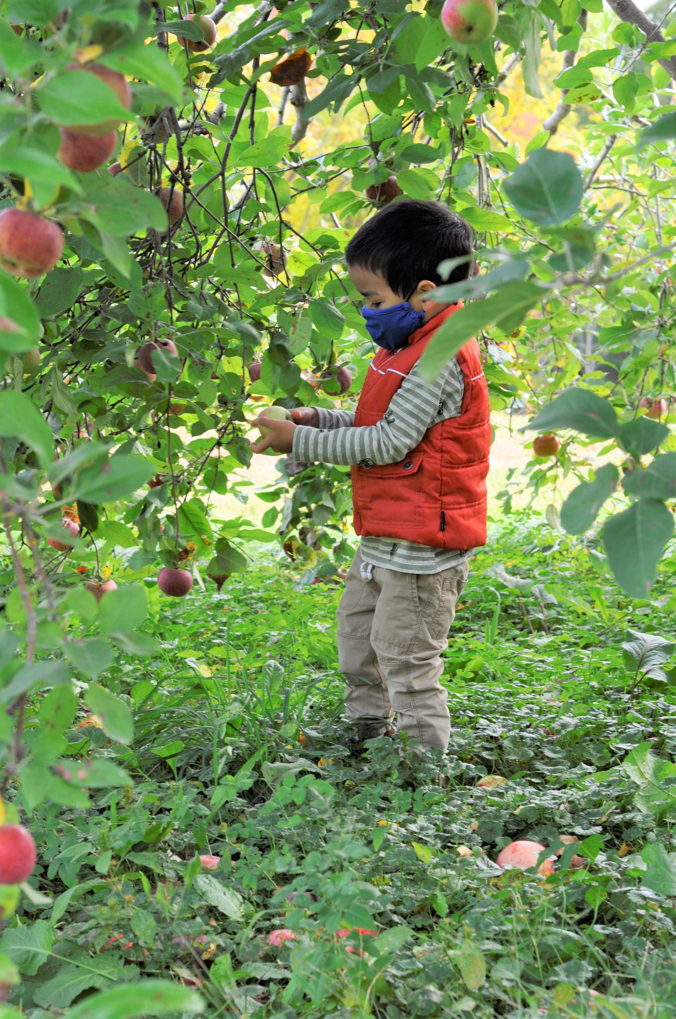 Picking Apples at the Orchard | Taste As You Go