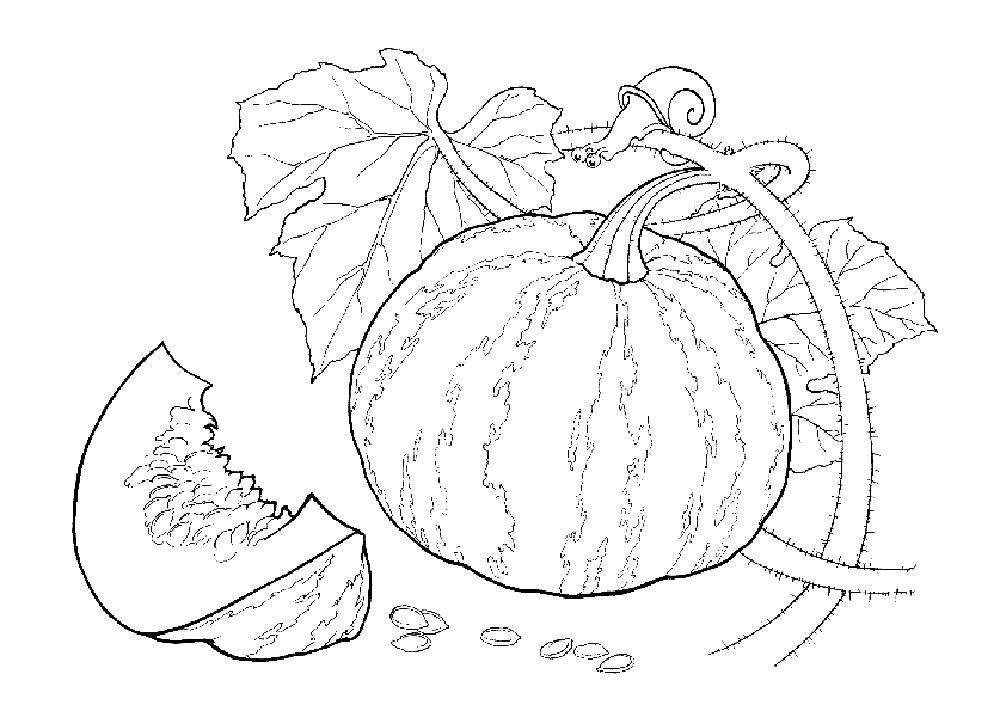 Gambar Mewarnai Kebun Buah
