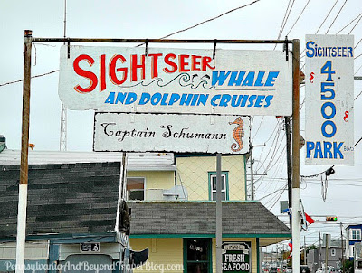 Sightseer Whale and Dolphin Cruises in Wildwood, New Jersey