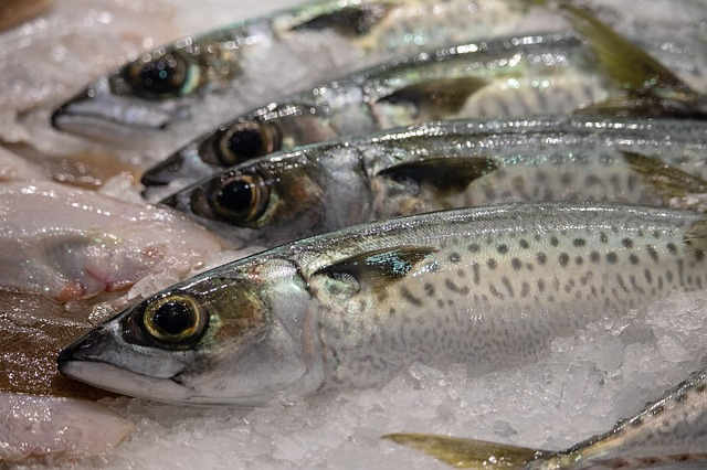 ikan segar