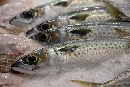 Cara Penanganan Ikan diatas Kapal untuk Menjaga Mutu