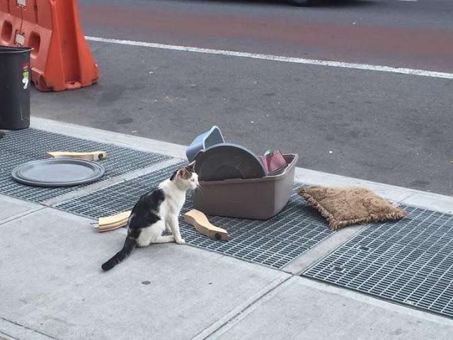 Tiraron a este gatito a la calle, ahora tiene un nuevo hogar