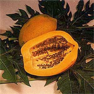 Pohon pepaya ini berasal dari tempat Meksiko dan biasa di tanam di pekarangan rumah atau  Kandungan dan Manfaat Buah Pepaya untuk Kesehatan
