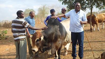 SAM 2134%2B %2BCopy - Ufugaji katika shamba la Rushu Ranchi Kisarawe