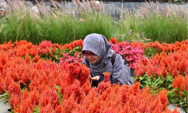 kebun Bunga begonia lembang bandung