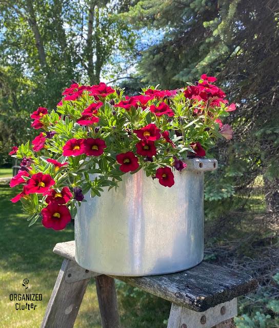 Photo of calibrachoa & supertunia planted in a kettle