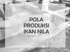 Mengenal pola produksi ikan nila