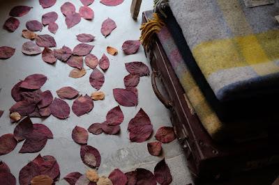 松本市の雑貨・セレクトショップ monbus(モンバス)落ち葉とトランク