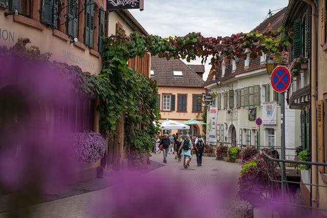 Kalmit-Felsenmeer-Tour | Maikammer | Wanderung Südliche Weinstraße 16