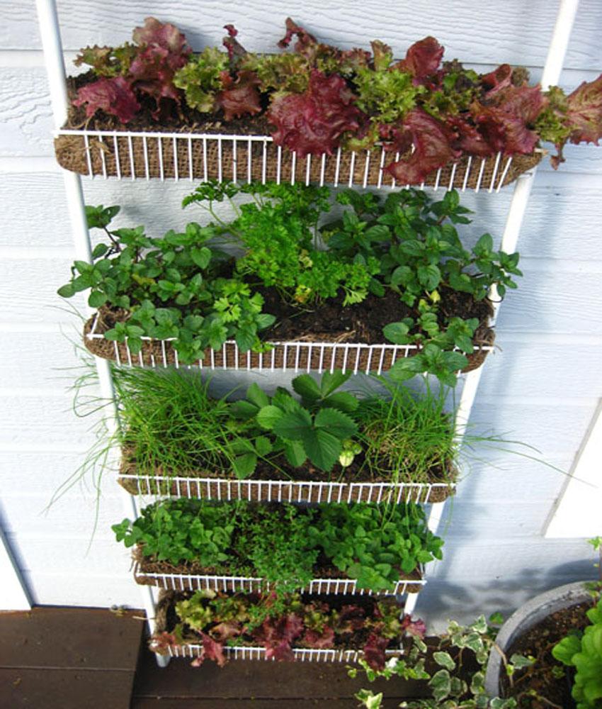 Домашнее садоводство: как обустроить свой балкон или подокон.