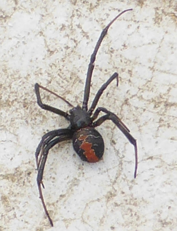 Old writer on the block: Scary spiders