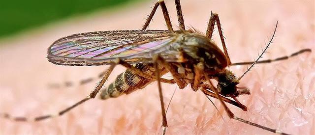 Δυο νεκροί από τον ιό του Δυτικού Νείλου στην Ελλάδα