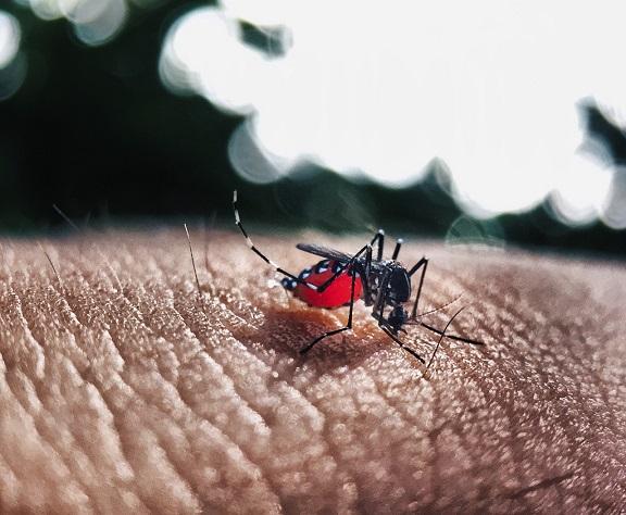 Dengue: Fisiopatología y Vacunas | Actualización 2021 | Teranmed