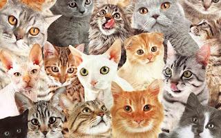 Bienvenidos a Solo Gatos