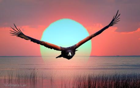 abutres voam sobre a liberdade de expressão