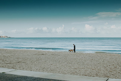 A man and a brown dog walk on the beach in the distance