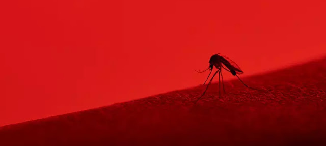 Ivaiporã registra 936 casos de dengue, sendo 823 autóctones