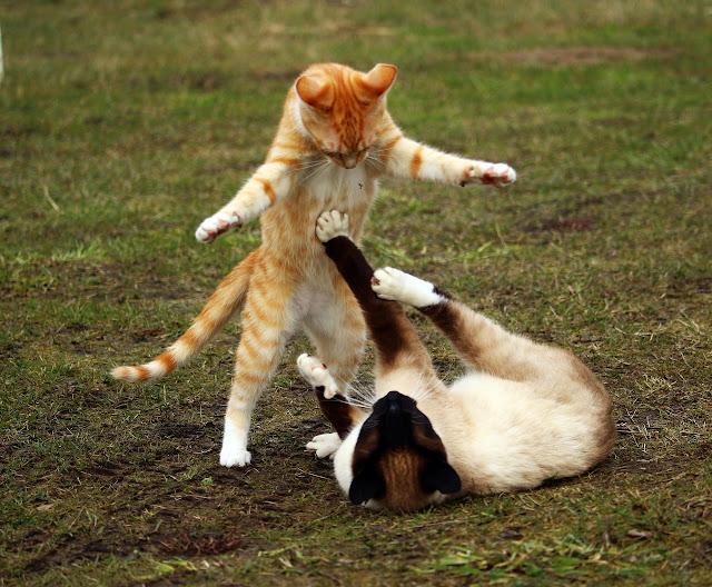 Mengenal Karakter Kucing Lewat Gerak-Geriknya