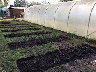 gardening, horticulture