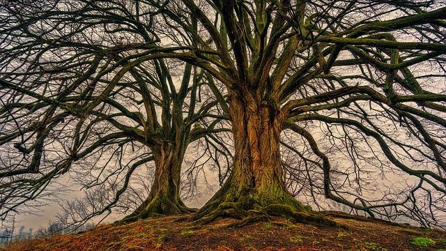 Dowload Foto Pohon Alam Kayu Musim Dingin Gratis