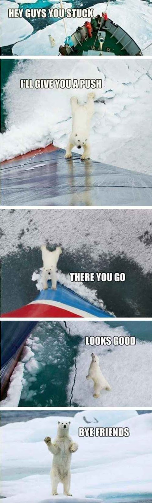Funny Helpful Polar Bear Picture