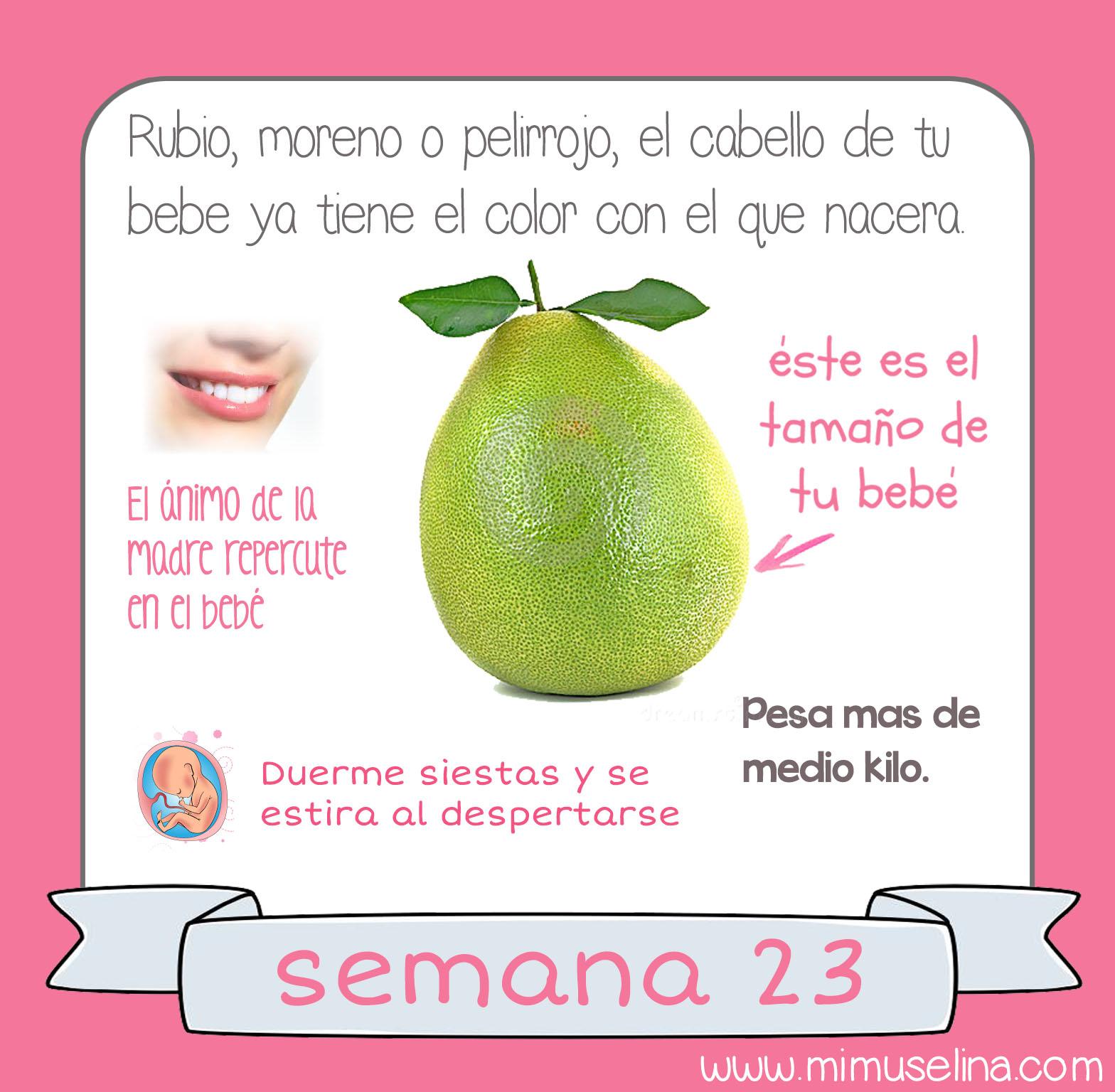 160456bda BebeBlog by mimuselina  Semana 23 embarazo. Tamaño y evolución del ...