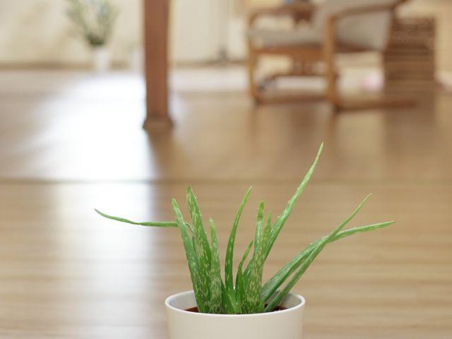 5 Pflanzen für Ihr Schlafzimmer, die Ihnen helfen besser zu schlafen