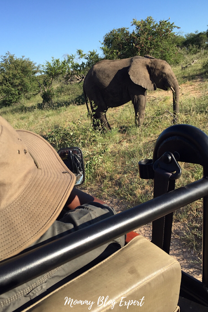 Elephant Safari Sabi Sands South Africa