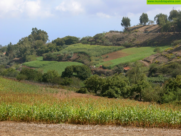 El Gobierno canario convoca ayudas a los productores de cultivos forrajeros destinados a alimentación animal