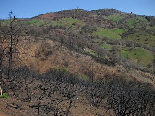 Charred trees and bare hillside near the top of Mt. Diablo