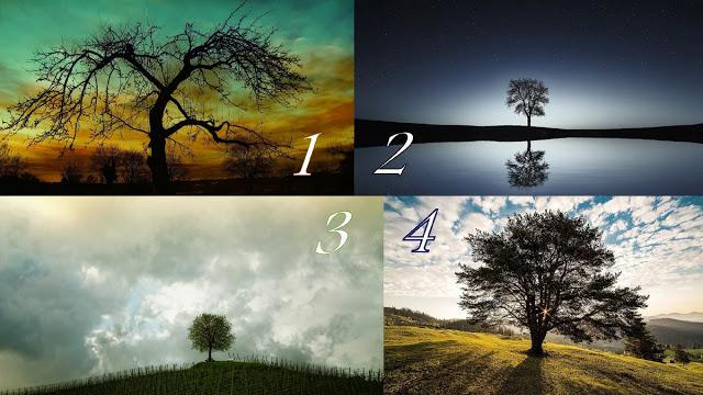 Гадание на Деревья. Выберите магическое дерево и читайте экспресс-предсказание на завтра