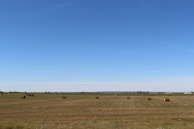 Bales in Manitoba field