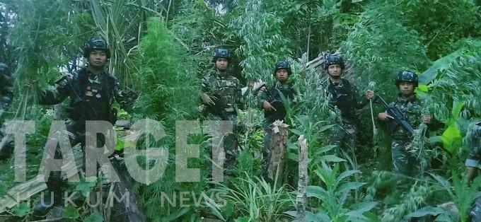 Penemuan Lahan Ganja Saat Patroli Keamanan Satgas Raider 300