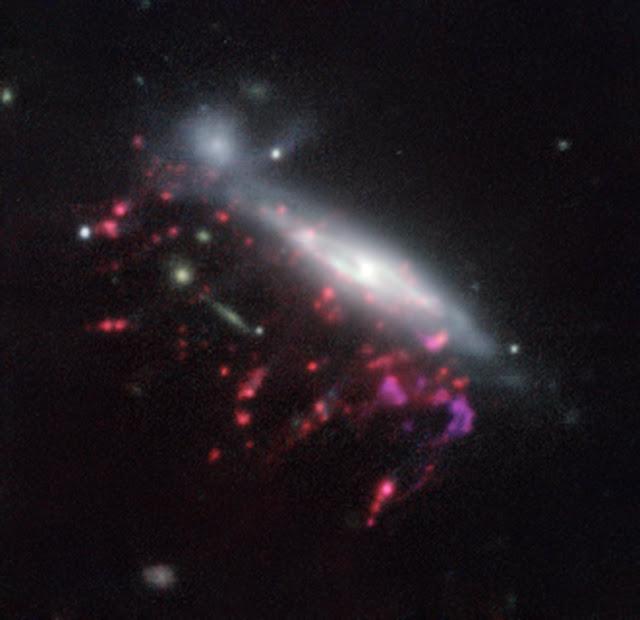 Supermassive black holes feed on cosmic jellyfish