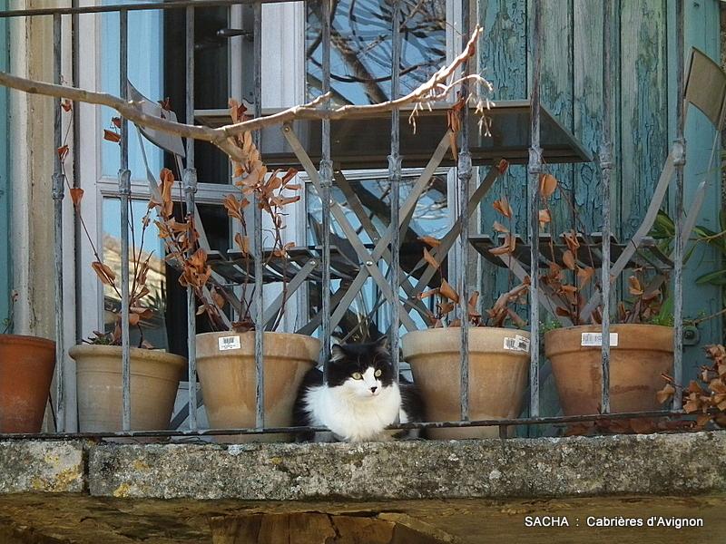 un jour une photo cabri res d 39 avignon ou dialogue avec un chat. Black Bedroom Furniture Sets. Home Design Ideas