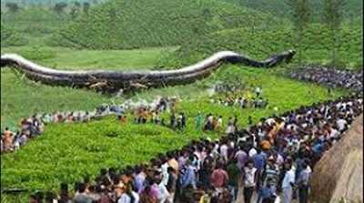 এখনও পর্যন্ত এটিই বড় সাপ লক্ষ লক্ষ মানুষের ভিড়।World longest Snake.