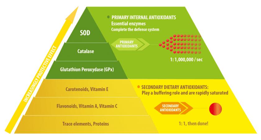 Antioxidant enzyme versus classical antioxidant