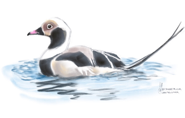 Long-tailed Duck bird painting by Artmagenta