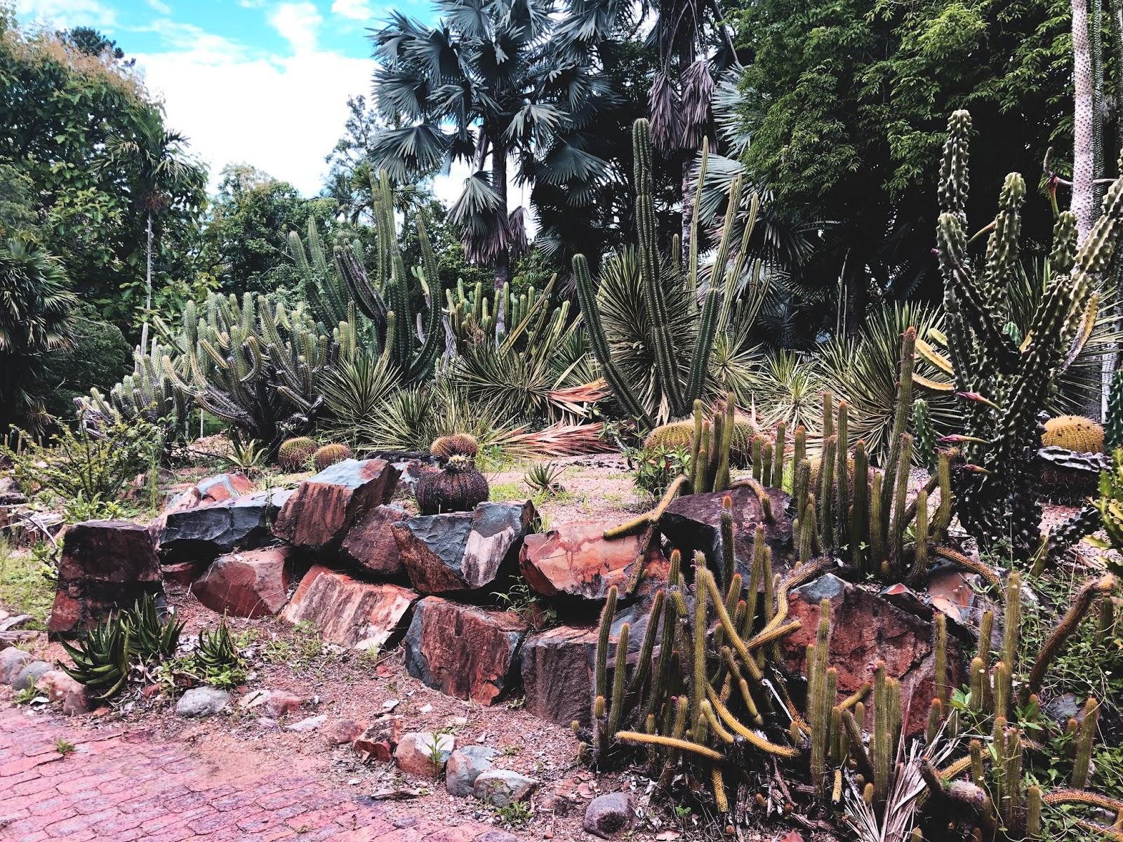 Cactuses at Rockhamton Botanic Gardens