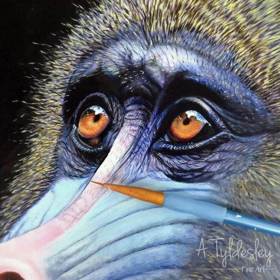 02-Baboon-s-Eyes-Amber-Tyldesley-www-designstack-co