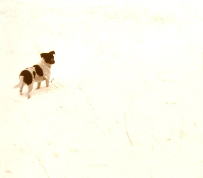 Notes from the Pack - a dog blog. Jack Russell Terrier.